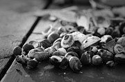 Seacoast Prints - Shells Print by Eric Gendron