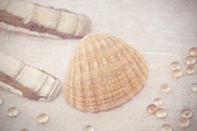 HJBH Photography - Shells