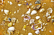 Seashell Photography Prints - Shells in the Sand Print by Kaye Menner