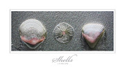 J R Baldini Metal Prints - Shells Metal Print by J R Baldini