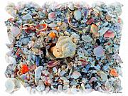 Beach Posters - Shells Poster by Judy  Waller