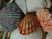 Gulf Originals - Shells by Juergen Roth
