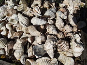 Rani De Leeuw - Shells