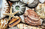 Round Shell Metal Prints - Shellscape Metal Print by Kaye Menner