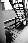 Wooden Stairs Metal Prints - Shelter Metal Print by Jessica Rose
