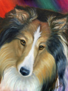 Collie Painting Framed Prints - Sheltie - Collie Framed Print by Beverly Fuqua