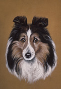 Black Curly Hair Pastels - Sheltie Collie by Patricia Ivy