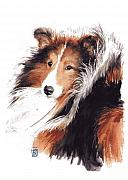 Dog Art Paintings - Sheltie by Debra Jones