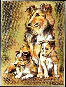 Chalk Drawing Metal Prints - Sheltie family Metal Print by Donald Carmichael