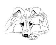 Pen And Ink Drawing Prints - Sheltie Love Print by Retouch The Past