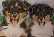Puppies Drawings Framed Prints - Sheltie Puppies Framed Print by Victoria Kader