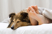 Enjoying Prints - Sheltie sleeping with her owner Print by Kati Molin