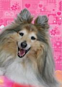 Dog Portraits Posters - Sheltie Smile Poster by Christine Till