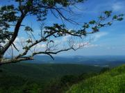 Blue Ridge Mountains Posters - Shenandoah Beauty Poster by Joyce L Kimble