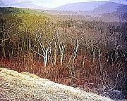Winter Mixed Media Posters - Shenandoah Wilderness Poster by Susan  Epps Oliver