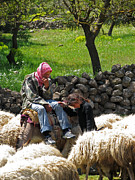 Issam Hajjar Prints - shepherds in Golan Print by Issam Hajjar