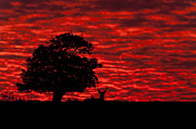 Deer Silhouette Prints - Shepherds Warning Print by Andy Astbury