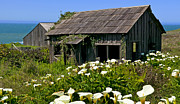 Overgrown Metal Prints - Shepherss shack Metal Print by Garry Gay