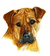 Boxer Drawings Framed Prints - Sherman Framed Print by Deb Gardner
