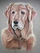 Dogs Pastels Prints - Sherman Print by Deb LaFogg-Docherty