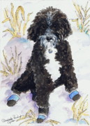 Sheepdogs Art - Sherpadoodle by Amanda Philipson Graham