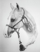 Horses Drawings - Shes the Gentle One by Tracy L Teeter
