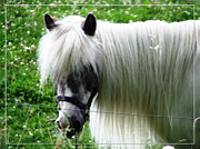 Miniature Effect Photos - Shetland Pony with Oil Painting Effect 2 by Rose Santuci-Sofranko