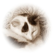 Sleeping Cats Posters - Shhh Poster by Sharon Lisa Clarke