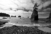 Olympic National Park Prints - Shi Shi Beach Print by Ian Stotesbury