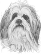 Designer Dogs - Shih-Poo by Barbara Keith