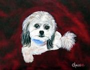 Shih Tsu Framed Prints - Shih Poo Framed Print by Chrissie Leander