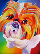 Alicia Vannoy Call Framed Prints - Shih Tzu - Divot Framed Print by Alicia VanNoy Call