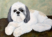 Shihtsu Framed Prints - Shih Tzu Framed Print by Anne Gregorie