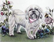 Pansies Drawings Framed Prints - Shih Tzu in Color Framed Print by Lena Auxier