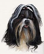 Shih Tsu Framed Prints - Shih Tzu Framed Print by Jimmie Trotter