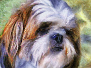 Small Paintings - Shih Tzu Portrait by Jai Johnson