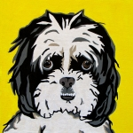 Yellow Dogs Framed Prints - Shih tzu Framed Print by Slade Roberts