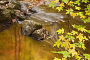 Autumn Photographs Posters - Shimmering Gold Poster by Rob Travis