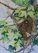 Flycatcher Painting Originals - Shining Cuckoo at Warbler Nest by Phong Trinh
