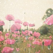 Shiny Poppies In The Summer Heat Print by Monika Strigel