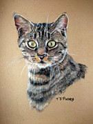 Cat Pastels - Shock by Tanya Patey