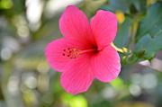 JISS JOSEPH - shoe flower