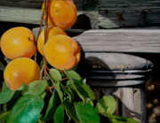 Apricots Originals - Shoo Fly by Lester Nielsen