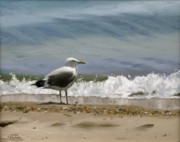 Gull Paintings - Shoreline Breeze by Linda Tenukas