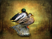 Ducks Digital Art Posters - Shoreline Poster by Jessica Jenney