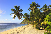 Coconut Palm Tree Posters - Shoreline Of Anse Parnel, Mahe, Seychelles Poster by F. Lukasseck