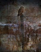 Dark Framed Prints Posters - Short Eared Owl Poster by Jerry Cordeiro