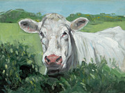 Hedge Paintings - Shorthorn Heifer by Chris Pendleton