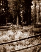 Pine Needles Prints - Shoshone Fences Print by Karen Musick