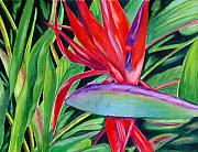 Bird Of Paradise Flower Painting Framed Prints - Showgirl Framed Print by Marsha Elliott